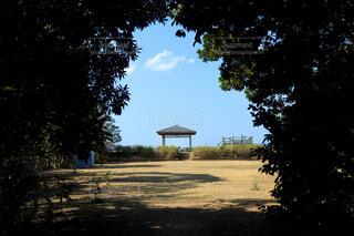 自然,風景,空,公園,木,屋外,島,樹木,展望台,草木,木のトンネル