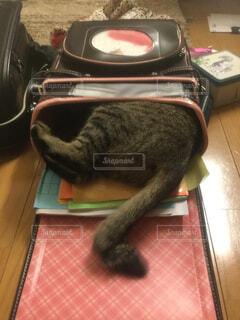 猫,動物,屋内,床,子猫,尻尾,ランドセル
