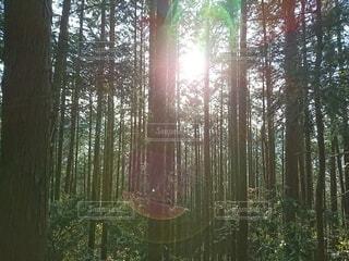 森の中で癒しの写真・画像素材[4384100]