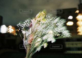 ドライフラワーが咲くの写真・画像素材[4384786]