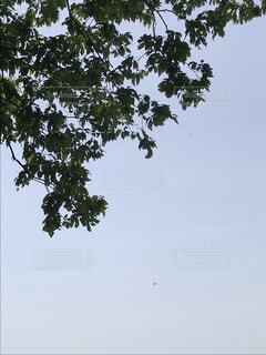 空,屋外,青空,樹木,草木