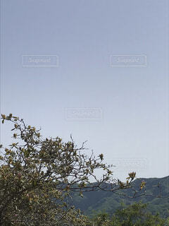 空,鳥,屋外,青空,樹木,草木