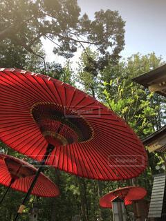日本文化を象徴する和傘の写真・画像素材[4389956]