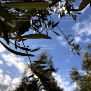 空,屋外,雲,葉,樹木,草木,針葉樹