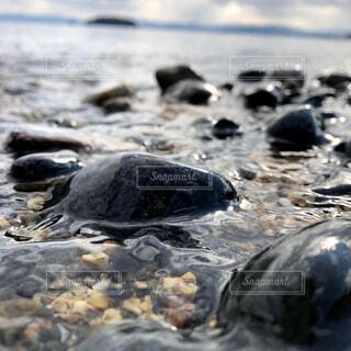 海,動物,屋外,ビーチ,砂浜,黒,水面,岩