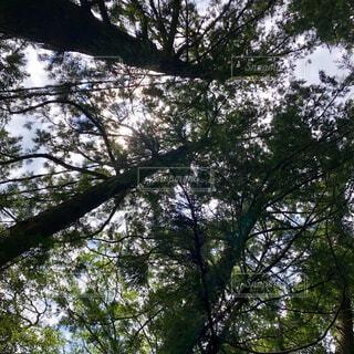 空,森林,屋外,樹木,日陰,草木,日中,オーク