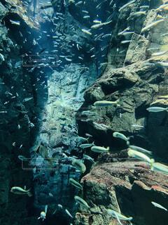 魚,屋外,水族館,水面,葉,岩,水中,ダイビング