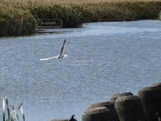 動物,鳥,屋外,湖,川,水面,岩,テトラポット,はばたく鳥