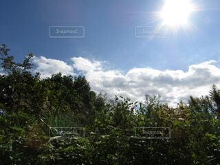 太陽,雲,青空,草