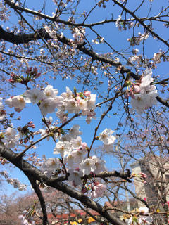 春の写真・画像素材[409412]