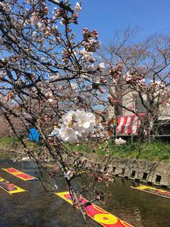 春の写真・画像素材[409414]