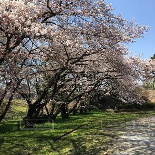 春の写真・画像素材[413462]