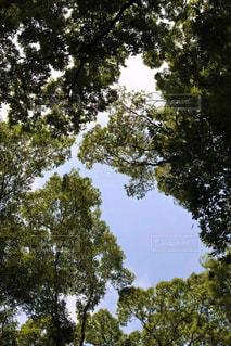 風景の写真・画像素材[465173]
