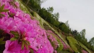 花,草木,ブロッサム