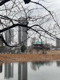 空,屋外,湖,水面,樹木
