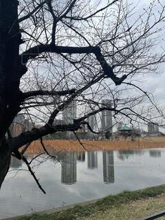 空,公園,屋外,湖,川,水面,樹木