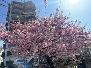 花,春,屋外,樹木