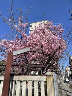 公園,花,春,屋外,樹木,ブロッサム