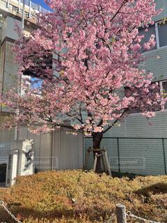 建物,花,屋外,樹木,ブロッサム