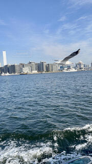 海,空,鳥,屋外,湖,ボート,波,船,水面,海岸,高層ビル,日中