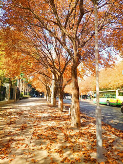 公園,秋,屋外,樹木,地面,通り,カエデ