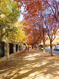 空,秋,屋外,樹木,都会,通り,カエデ