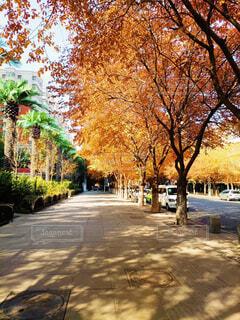 風景,空,秋,屋外,道路,樹木,通り,カエデ