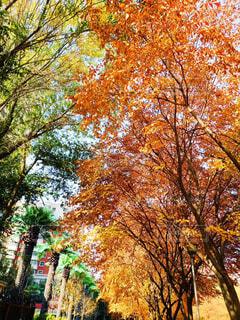 空,公園,秋,屋外,葉,オレンジ,樹木,落葉,草木