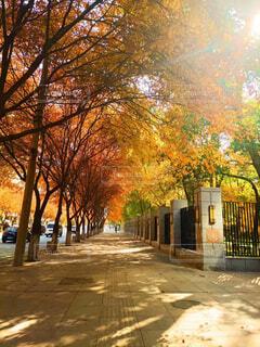 空,秋,屋外,樹木,カエデ