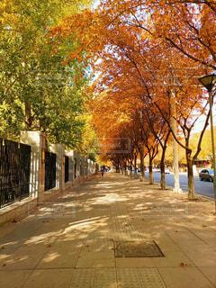 空,秋,屋外,樹木,通り,カエデ