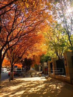 空,秋,屋外,樹木,通り,落葉,墓地,カエデ
