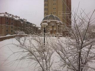 空,建物,冬,雪,屋外,樹木
