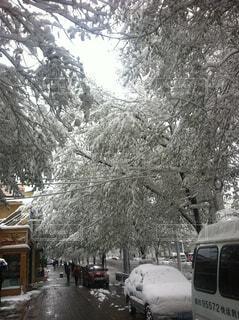 冬,雪,屋外,樹木,日中