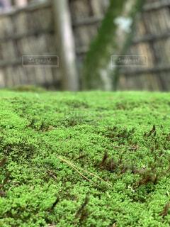 緑の苔のクッションの写真・画像素材[4433823]