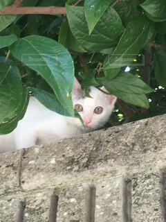 塀の上の猫の写真・画像素材[4434399]