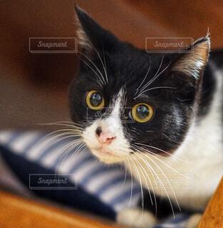 好奇心いっぱいなネコの写真・画像素材[4434579]
