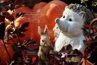 ハロウィンの森の写真・画像素材[4931159]