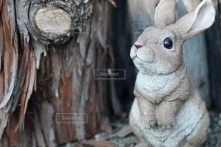 ハロウィンの森の写真・画像素材[4932008]