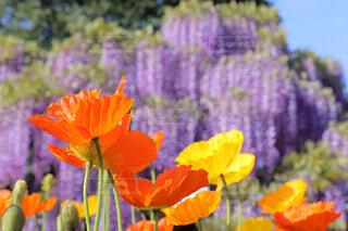 花,オレンジ,草木,フローラ