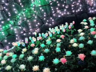 花,屋外,カラフル,バラ,チューリップ,草,薔薇,イルミネーション