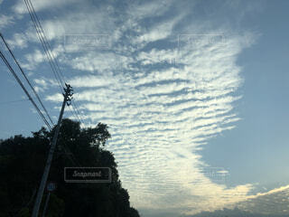 空,屋外,雲,夕暮れ,夕方,樹木,筋雲