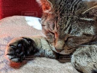 温まる愛猫の写真・画像素材[4393334]