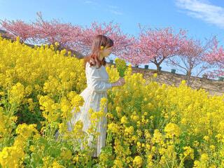 女性,20代,空,花,桜,花畑,屋外,ピンク,ワンピース,花束,青空,黄色,菜の花,景色,樹木,イエロー,草木,フォトジェニック,お花摘み,なばな,インスタ映え,写真映え