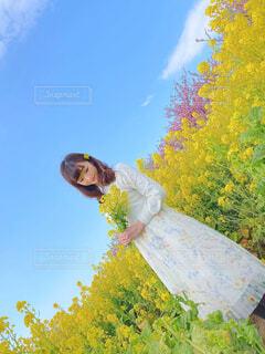女性,空,花,春,桜,花畑,屋外,ピンク,ワンピース,白,花束,青空,黄色,菜の花,景色,樹木,ふわふわ,人物,人,暖かい,菜の花畑,ホワイト,スプリング,フォトジェニック,なばな,インスタ映え,写真映え