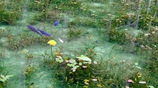 透き通る水の写真・画像素材[4408417]