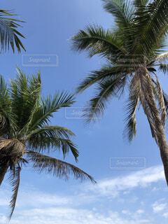 空,屋外,ビーチ,樹木,ヤシの木,ヤシ,ココナッツ,草木,パーム,アブラヤシ,ナツメヤシ,ヤシ目,ババス,ダイオウヤシ,サバルノコギリヤシ,ピーチパーム