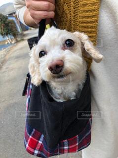 犬,動物,かわいい,ドヤ顔,お散歩,テリア,着衣