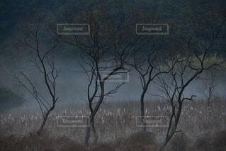 朝霧からのメッセージの写真・画像素材[4390300]