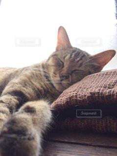 猫,動物,屋内,昼寝,ペット,子猫,愛猫,ネコ科