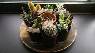 花,屋内,窓,植木鉢,観葉植物,草木,ポット